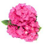 Flor Exterior 2125