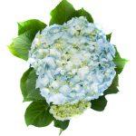 Flor Exterior 2129