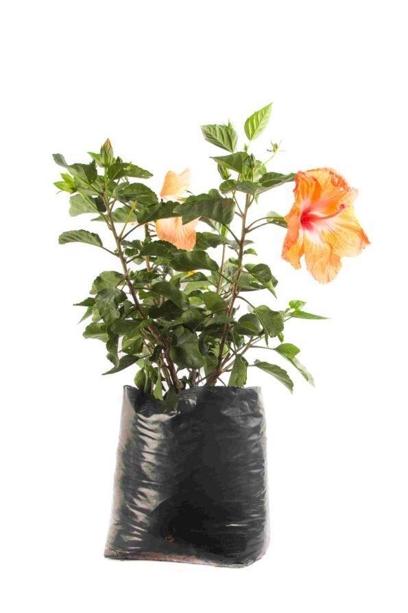 Flor Exterior Sanjoaquin 2534