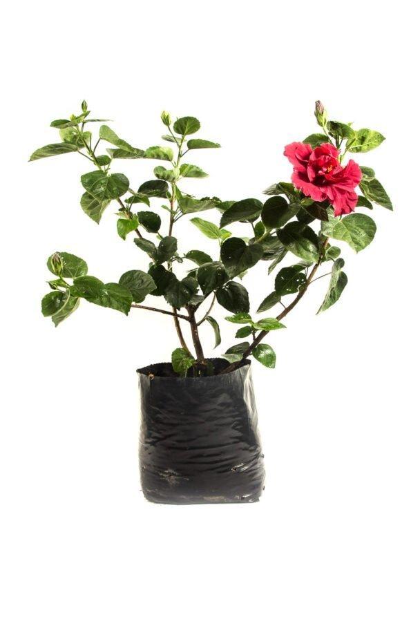 Flor Exterior Sanjoaquin 2544